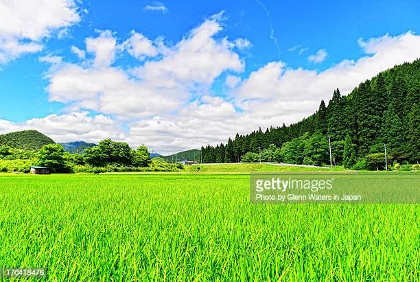 Akita Rice. Japan