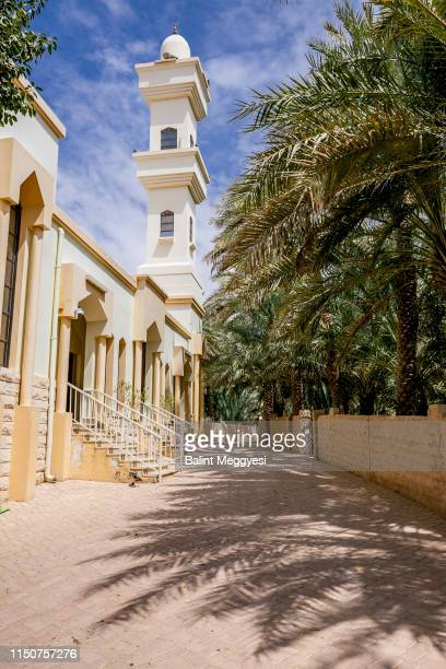 al ain oasis, al ain, u.a.e. - beverly hills california stock pictures, royalty-free photos & images