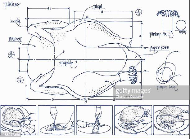 Al Phillips color illustration Done in architect's blueprint style a drawing of a turkey labeling dimensions and parts with bottom panels showing the...