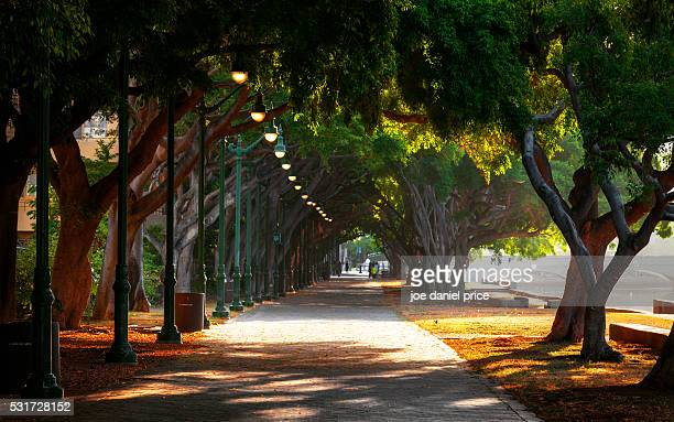 ala wai promenade, honolulu, oahu, hawaii, america - boulevard stock pictures, royalty-free photos & images