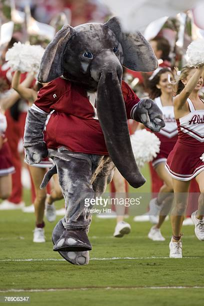 Alabama Crimson Tide mascot runs onto the field at the start of a game against the Arkansas Razorbacks at BryantDenny Stadium on September 15 2007 in...