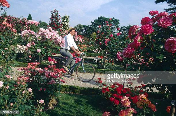 Alain Woisson the head gardener of Bagatelle Park cycles through an effusion of colour in the park's celebrated rose gardens home to an annual rose...