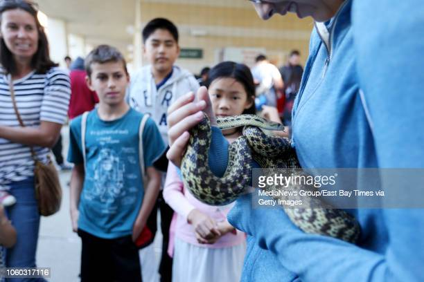 Alana Ball of Concord holds a California kingsnake brought by Mount Diablo Interpretive Association during the Bay Area Science Festival at Cal State...