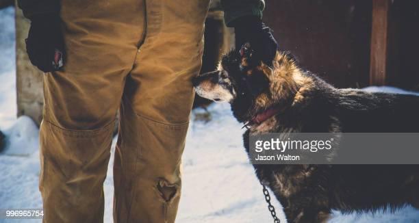 alaska adventures - segunda feira - fotografias e filmes do acervo