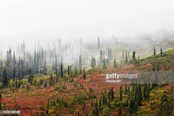 USA, Alaska, autumn in Denali National Park