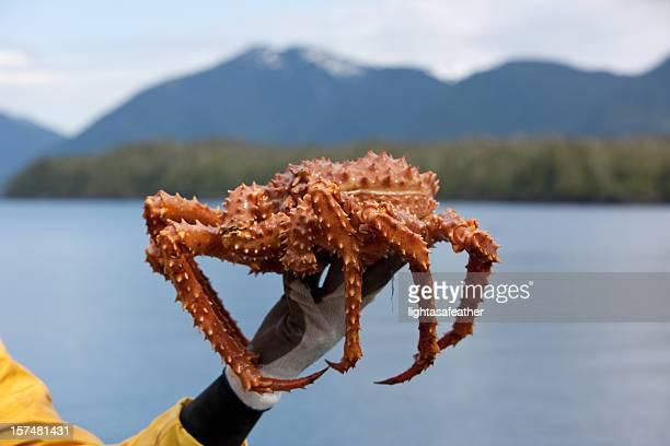De cangrejo real de Alaska