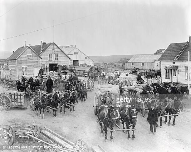 Klondike Gold Rush Teams of horses with wagons in Nome Alaska