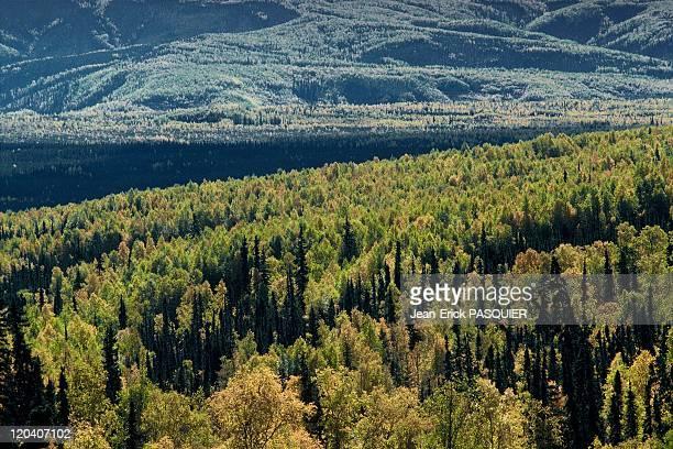 Alaskan landscapes in United States Fall colors in Central Alaska