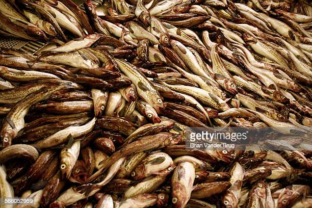 Alaskan Pollock is America's largest fishery Its white flesh is used in McDonald's and Burger King's fish sandwiches as well as sold in supermarket...