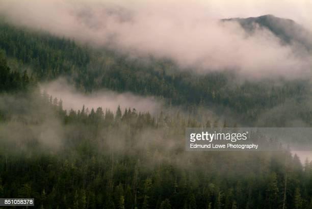alaskan rainforest - アラスカ文化 ストックフォトと画像