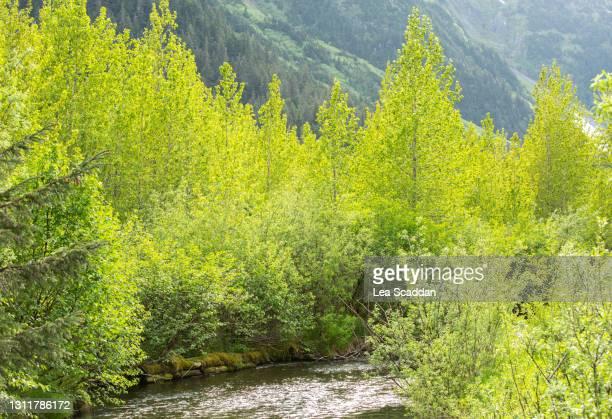 alaskan river - アラスカ文化 ストックフォトと画像