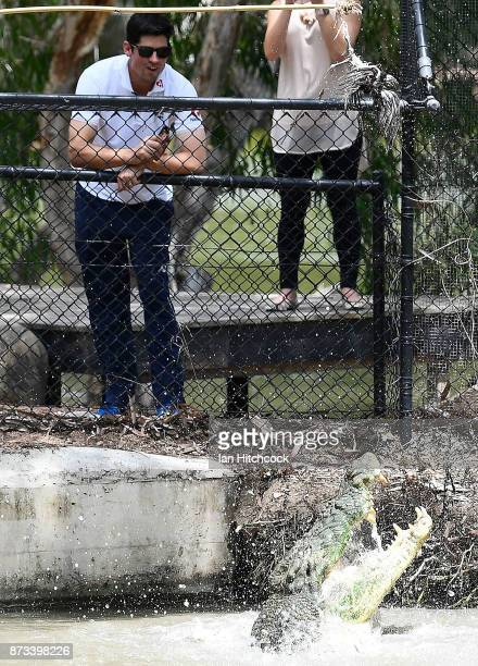 Alastair Cook of England looks on as a crocodile is being feed during the England media opportunity on November 13 2017 at Billabong Sanctuary in...