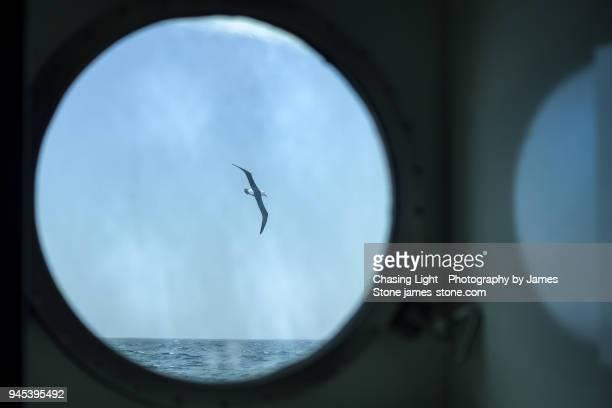Albatross in flight viewed through a ship's porthole