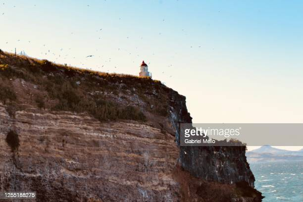 albatrosses and seagulls flying in otago peninsula - otago stock pictures, royalty-free photos & images