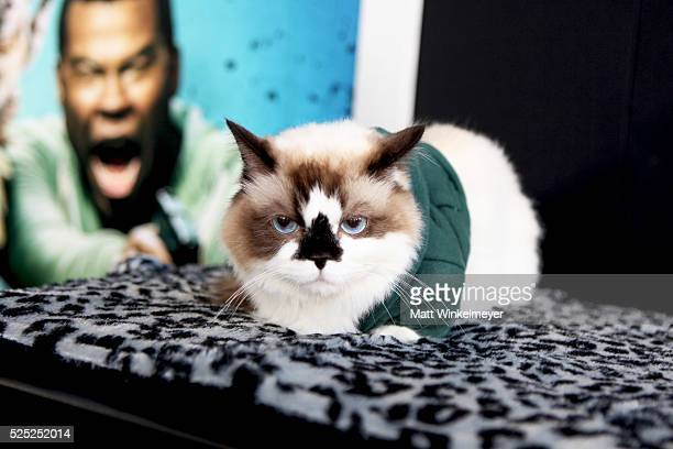 ac9975664 14 Albert Baby Cat Pictures, Photos & Images - Getty Images
