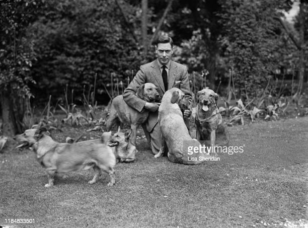 Albert Duke of York with his dogs including Pembroke Welsh Corgi dogs Dookie and Jane at the Royal Lodge Windsor UK June 1936