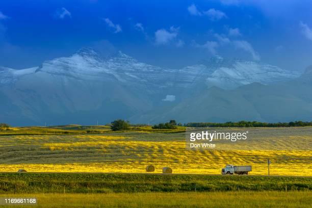 alberta canada countryside - strada di campagna foto e immagini stock