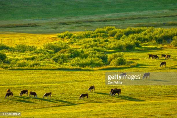 alberta canada countryside - foothills stock pictures, royalty-free photos & images