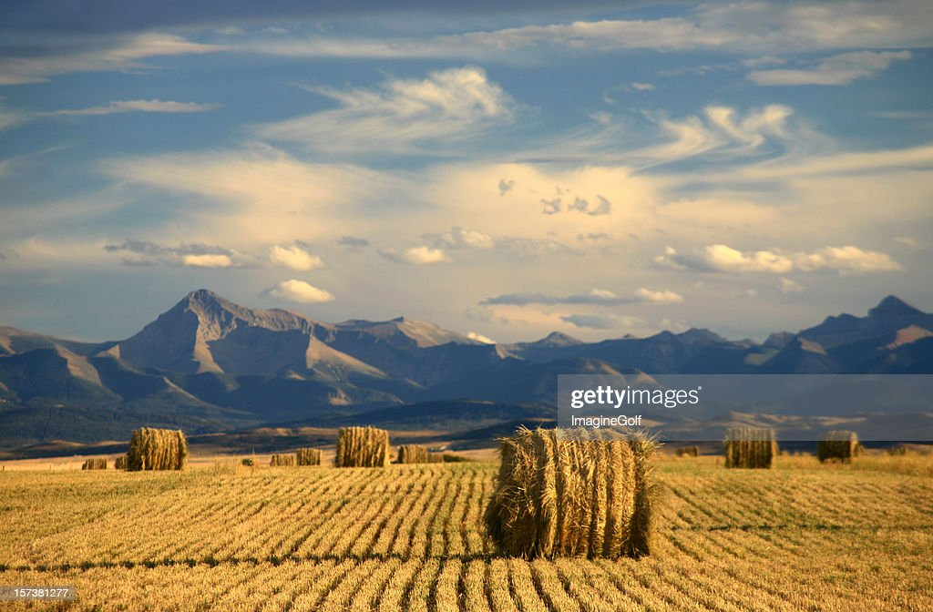 Alberta Scenic With Agriculture and Harvest Theme : Stockfoto