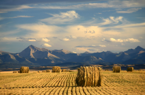Alberta Scenic With Agriculture and Harvest Theme 157381277