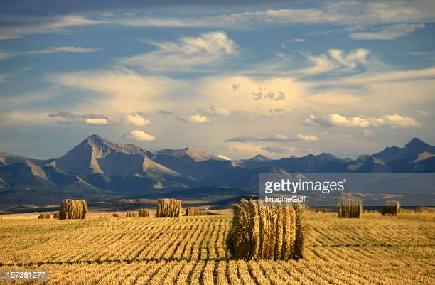 alberta scenic with agriculture and harvest theme - canada stock pictures, royalty-free photos & images