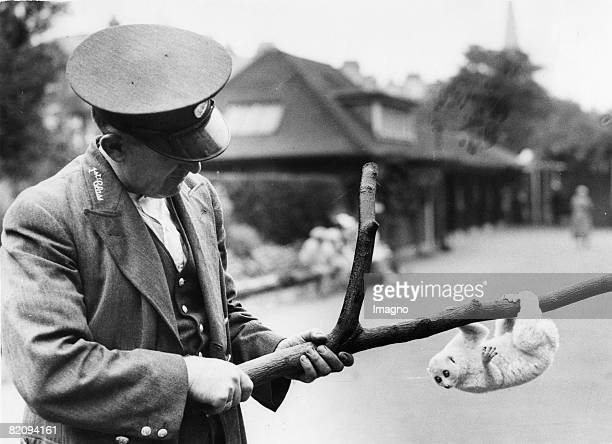 Albino-sloth - a new attraction in the London zoo, Photograph, Around 1935 [Albino-Faultier als neue Attraktion im Londoner Zoo, Photographie, Um...