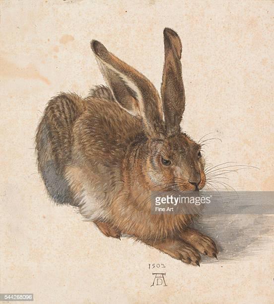 Albrecht Dürer Hare watercolor and gouache Albertina Museum Vienna Austria