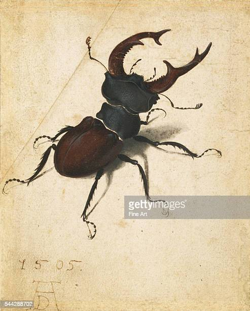 Albrecht Dürer Stag Beetle watercolor and gouache on paper 141 x 114 cm The J Paul Getty Museum Los Angeles