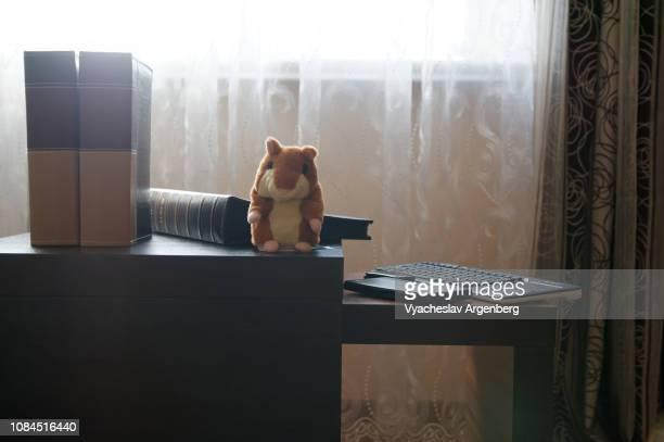 album books in home environment, warm brown colors - argenberg - fotografias e filmes do acervo