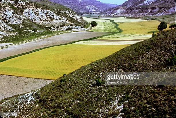 Alcarria Guadalajara Valleys and sowings