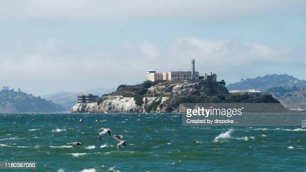 alcatraz island and pelicans - alcatraz island stock pictures, royalty-free photos & images