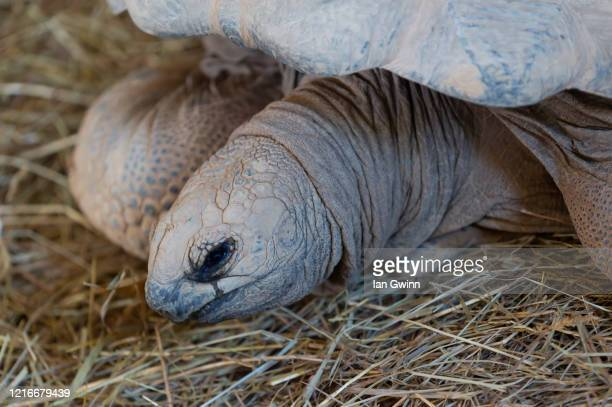 aldabra tortoise - ian gwinn stock pictures, royalty-free photos & images