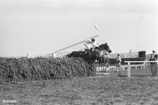 Aldaniti with Bob Champion in the saddle jumps the last fence to go on to win the Grand National Handicap Steeplechase at Aintree Liverpool