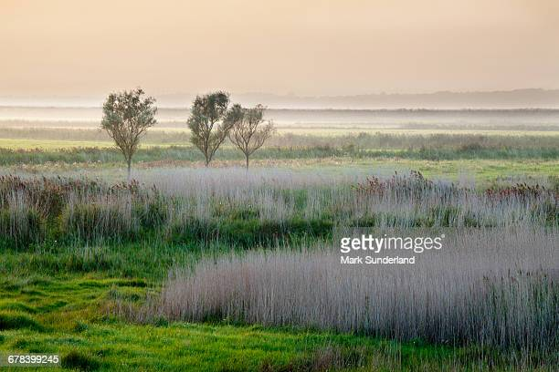 aldeburgh marshes at sunset, suffolk, england, united kingdom, europe - suffolk england stock photos and pictures