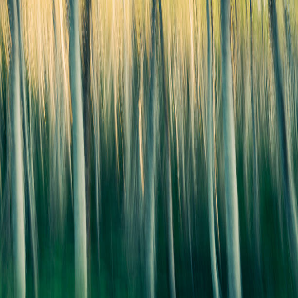 Alder tree forest abstract, blurred motion, Olympic National Park, Washington, USA
