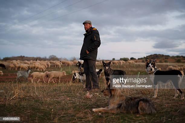 Alejandro Belenchon checks the sheep herd as it enters into the portable fence before night along the Canada Real Conquense o de los Serranos on...