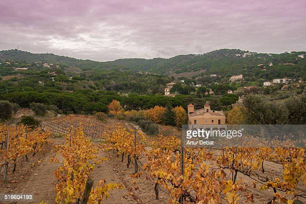 Alella vineyards in the Maresme region in autumn season with orange colors and landscape Catalonia Europe