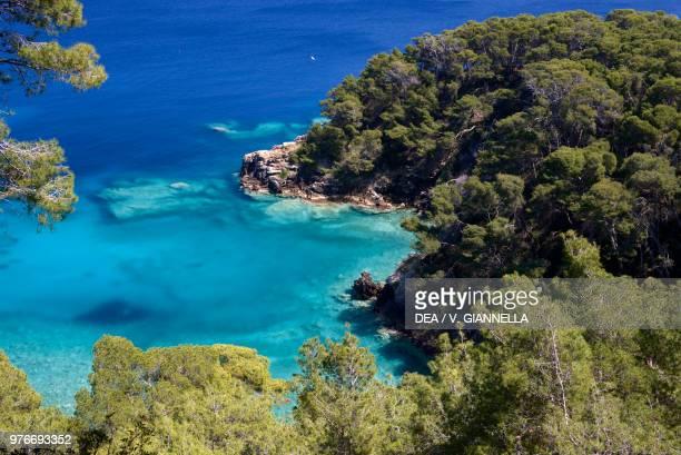 Aleppo pines , Pinaceae, Cala Matano, San Domino, Tremiti Islands, Gargano National Park, Apulia, Italy.