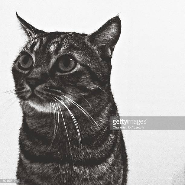 Alert cat looking away against white background
