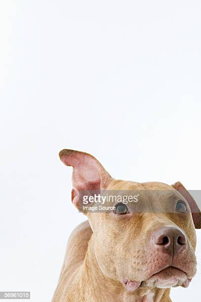 alert dog - one animal stock pictures, royalty-free photos & images