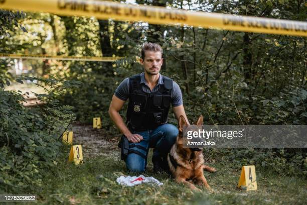 alert german shepherd and young male officer at crime scene - police dog stock pictures, royalty-free photos & images