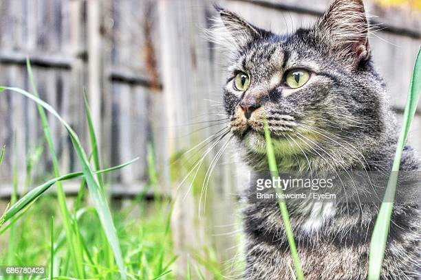 Alert Tabby Cat Looking Away Outdoors