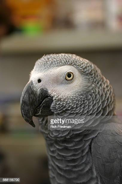 Alex a gray parrot has been the subject of communication and intelligence research by Irene M Pepperberg PhD aresearch scientist at MIT School of...