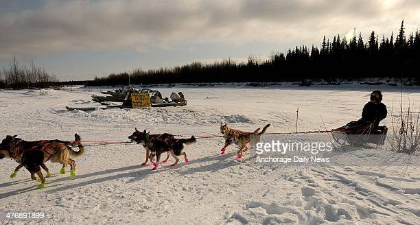 Alex Buetow drives his dog team into the Nikolai checkpoint during the 2014 Iditarod Trail Sled Dog Race on Wednesday March 5 in Alaska