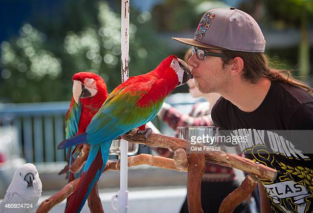 Alex Hurtado gets a kiss from a red parrot at Palisades Park near the Santa Monica Pier where exotic bird owners Donald Bogner and Howard Kaminsky...