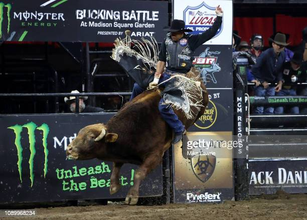 Alex Marcilio rides Buck John during the PBR Unleash The Beast bull riding event at Madison Square Garden on January 04 2019 in New York City