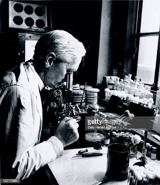 Alexander Fleming Scottish bacteriologist 18 December 1943 Professor Fleming working in his laboratory at St Mary's Hospital Paddington London...