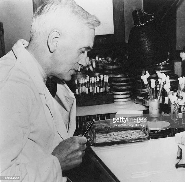 Alexander Fleming Scottish bacteriologist Discovered penicillin 1928 Photograph