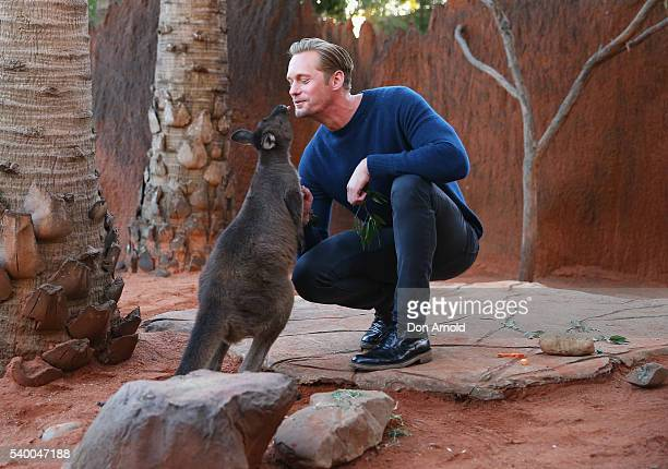 Alexander Skarsgard greets a wallaby during the Legend of Tarzan Photo Call at WILD LIFE Sydney Zoo on June 14 2016 in Sydney Australia