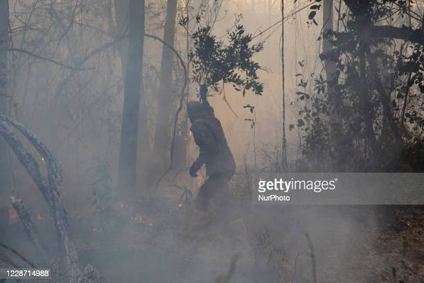 Alexandre Moura, a resident of the Capao neighborhood, in the city of Barao de Melgaco, in Mato Grosso, Brazil, on September 24, 2020 uses tree...